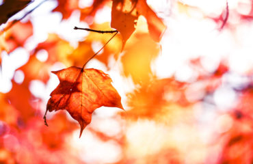 fall maple leaf - how to prepare your pharmacy for fall